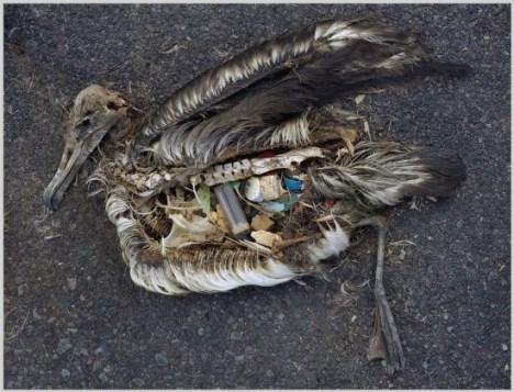 plastic-albatross