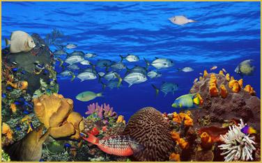 underwater-coral-reef--