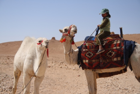 Young_Camel_Driver_-_Flickr_-_edbrambley