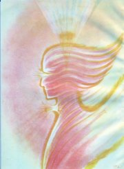 profile of rose angel