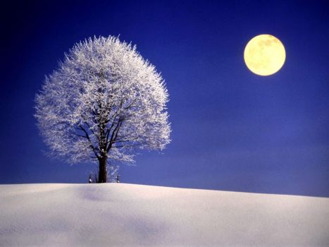 Winter-Night-with-Full-Moon-1024x768-wide-wallpapers.net-