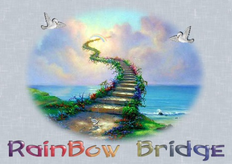 rainbow-bridg